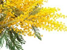 Festa della Donna: non  basta regalare la mimosa